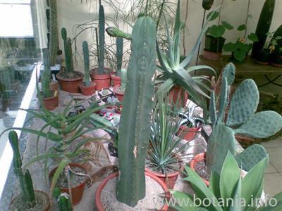 San Pedro Blume (27.5.2009)
